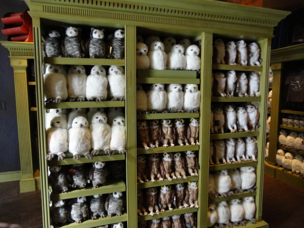 harry-potter-diagon-alley-owls