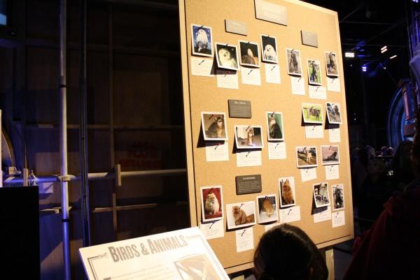 Tour Harry Potter Studio Londres Imagen (90)